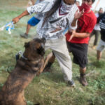 Judge Hauls Dakota Access Into Court After Sacred Sites Bulldozed, Dogs Unleashed on Tribe Members